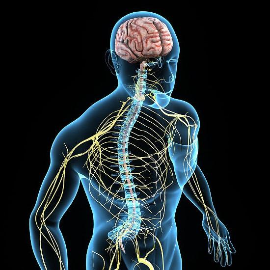 nervnaya sistema pohmelya n29 min