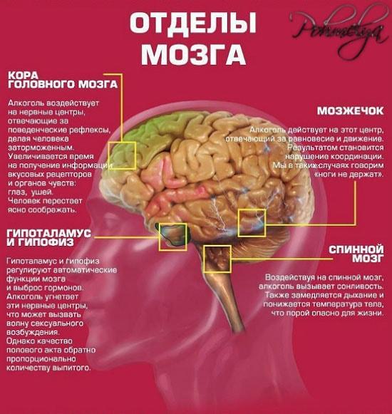 kak alkogol deistvyet na otdelu mozga pohmelya n605 min