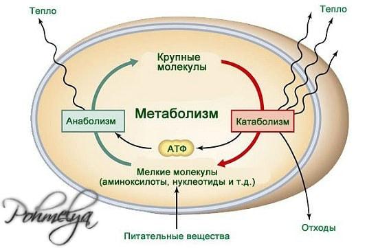 metabolizm pohmelya n617 min min