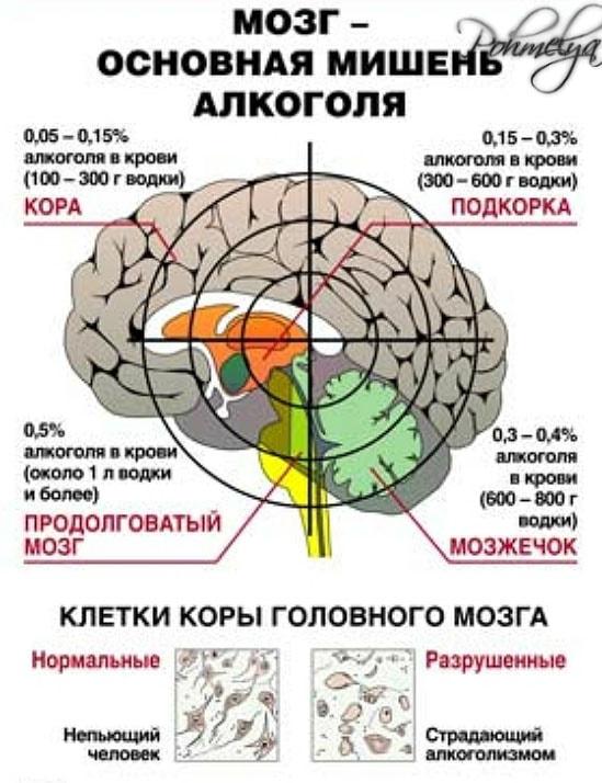 posledstvia alkogolya na mozg pohmelya n603 min