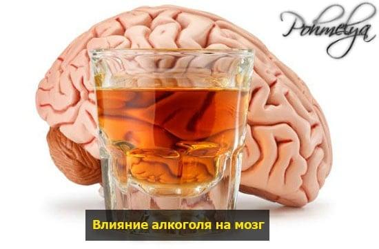vlianie alkogolya na mozg pohmelya n573 min