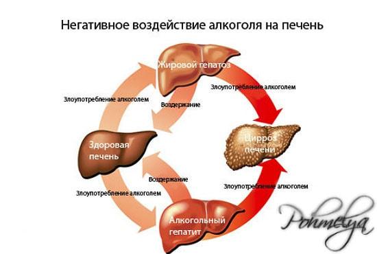 vlianie alkogolya na pechen pohmelya n572 min