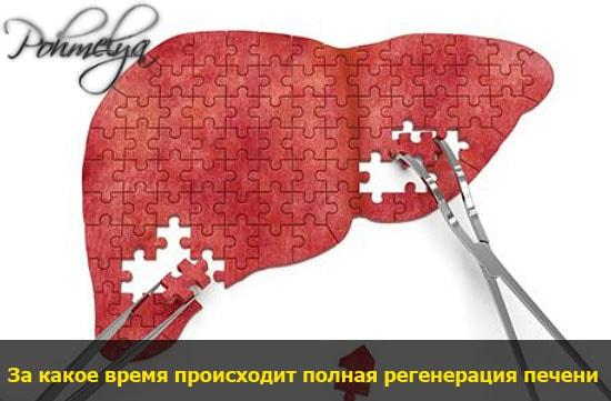 regeneracia pecheni pohmelya v1977 min