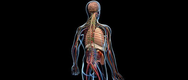 Восстановление нервной системы после алкоголя