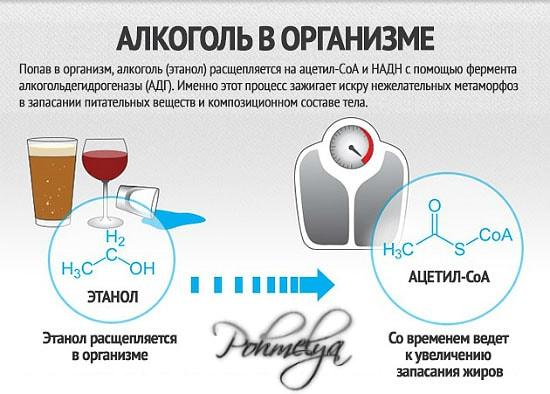 Фермент который расщепляет алкоголь