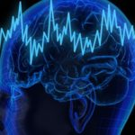 головной мозг анатомия