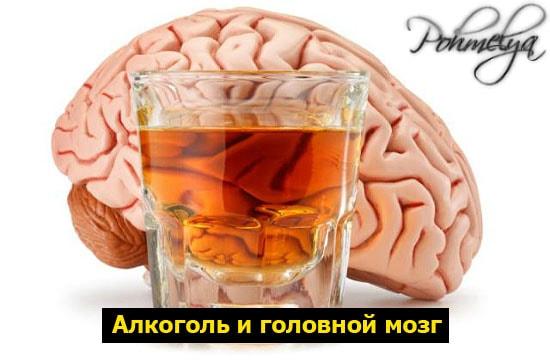 alkogol i golovnoi mozg pohmelya b95 min