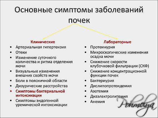 simptomu zabolevania pochek pohmelya n504 min