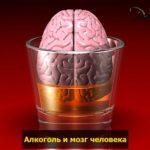 vlianie alkogolya na mozg pohmelya n601 min