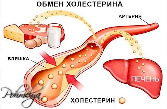 alkogol i holesterin pohmelya v741 min