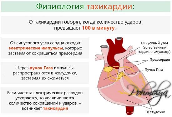fisiologia tahikardii pohmelya v1761 min