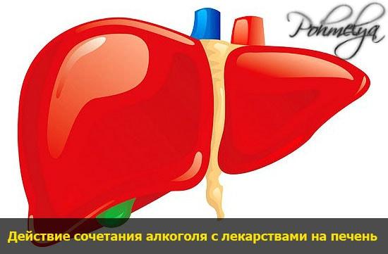 vlianie alkogolya i lekarstv na pechen pohmelya v1684 min