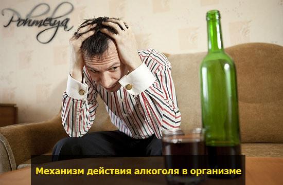 chto proishodit pri prieme alkogolya pohmelya v2263 min