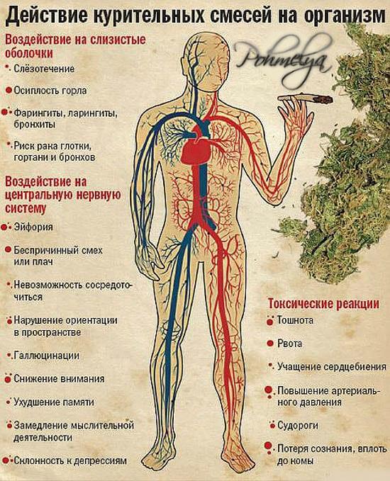 Последствия употребления марихуану чем удобрить коноплю в домашних